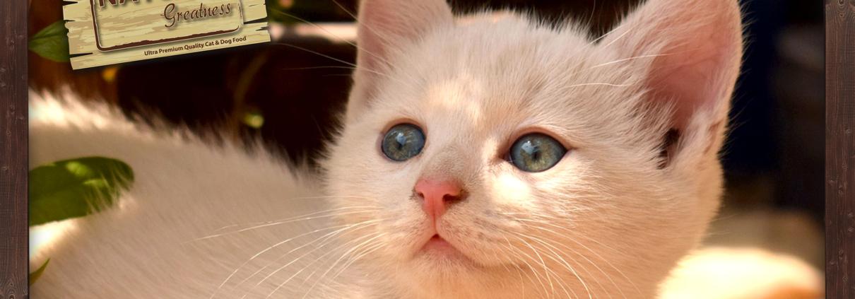 natural greatness katten